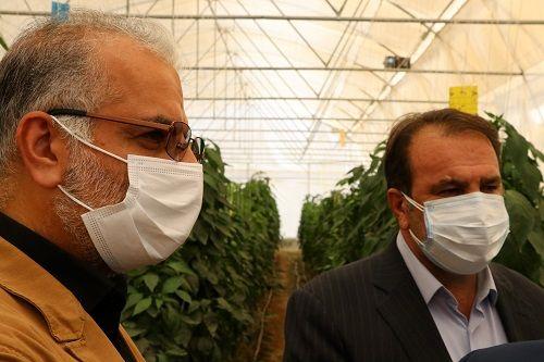 سرمایه لازم برای متقاضیان گلخانه فراهم می شود
