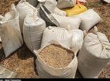 عدم قاچاق گندم در خراسان جنوبی