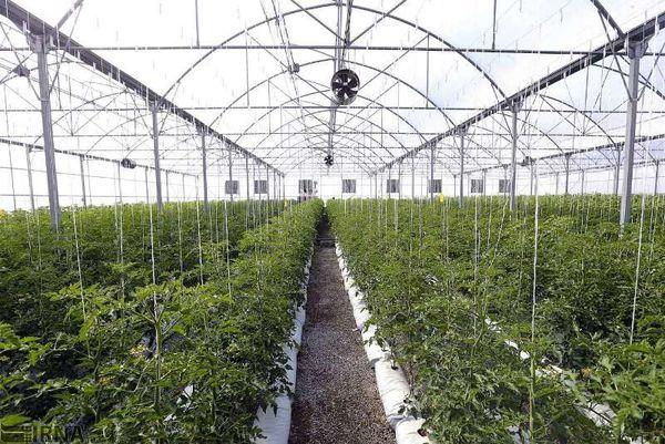 صدور تأسیس ۲۰۰ پروانه گلخانه کوچکمقیاس