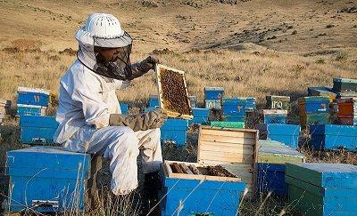 زنبورداران مشمول دریافت تسهیلات شدند