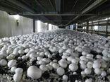 راه اندازی کارگاه دانش آموزی پرورش قارچ در بروجن
