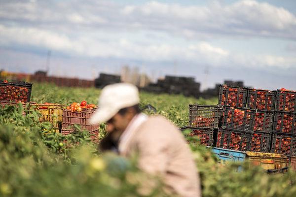 امید است با اشتغال مولد در روستا مهاجرت کم شود