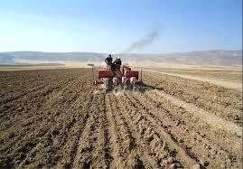کشت پاییزه نخود در شهرستان چرداول پایان یافت